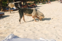 Tulum Beach La Eufemia Ahoi